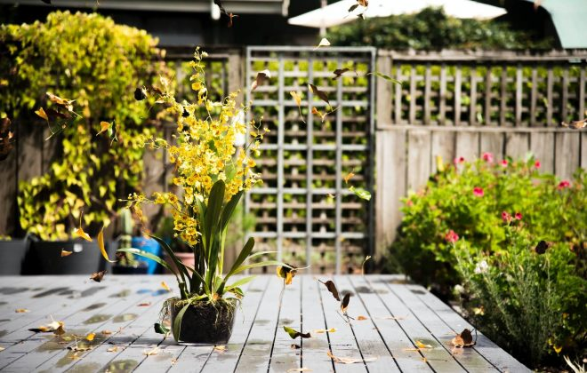 Solis Landscaping's full range of services